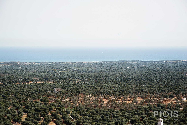 Apulia1477